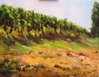 vineyard in Montferrato hills, Piemonte